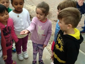 worms brooklyn kindy
